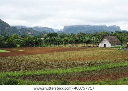 tobacco plantation and a typical cottage in a tropical area
