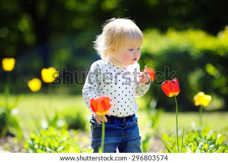 Toddler child smelling red tulip in the garden at the spring or summer day - stock photo