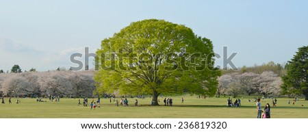 TOKYO,JAPAN - APRIL 4 : Giant tree, People enjoy Showa Park in spring taken April 4, 2013 in Tokyo. Showa Park is a popular place for enjoy sakura flower in early spring in Tokyo.  - stock photo