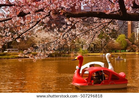 TOKYO, JAPAN - APRIL 12, 2012: People enjoy cherry blossoms (sakura) in Ueno Park, Tokyo. Ueno Park is visited by up to 2 million people for annual Sakura Festival.