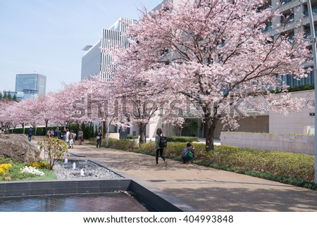 TOKYO,JAPAN - APRIL 1 : Tokyo cherry blossom festival in Japan. Tourist and locals enjoying the cherry blossoms at the street of Tokyo Midtown - stock photo