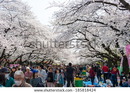 TOKYO, JAPAN - APRIL 1 2014: Visitors enjoy cherry blossom on April 1, 2014 in Ueno Park. Ueno Park is visited by up to 2 million people for annual Sakura Festival. - stock photo