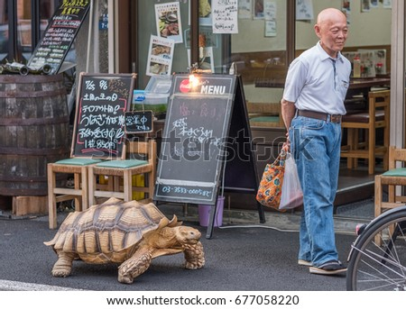 Friendly Tortoise ภาพสตอก ภาพและเวกเตอรปลอดคาลขสทธ - Man walks pet tortoise through tokyo