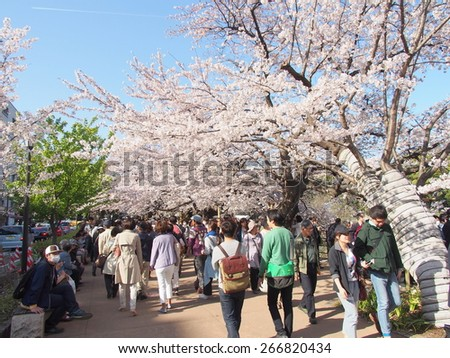 TOKYO, JAPAN - MAR 31: Chidorigafuchi in Tokyo, Japan on March 31, 2015. Chidorigafuchi is one of the best hanami spot in Tokyo.  - stock photo
