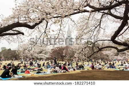 Tokyo, Japan - March 23, 2013: Japanese people is sitting in Shinjukugyoen park seeing Sakura blossom at Shinjuku, Tokyo, Japan - stock photo