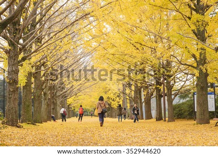 Tokyo, Japan - Nov 18, 2015 : Autumn is the peak period for travel at Showa Kinen Park, Tokyo, Japan. Maidenhair trees chang to yellow. It is beautiful scene.