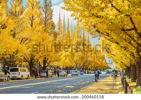 TOKYO, JAPAN - NOVEMBER 26: Icho Namiki Street in Tokyo, Japan on November 26 , 2013. The street nearby Meiji Jingu Gaien that has beautiful Ginkgo along the lenght of the street - stock photo