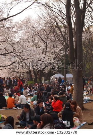 TOKYO - MARCH 24: Cherry blossoms in full bloom on March 24, 2013 at Inokashira Park in Tokyo, Japan. Inokashira Park is the most famous place to see cherry blossoms in Tokyo.