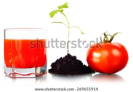Tomato. - stock photo