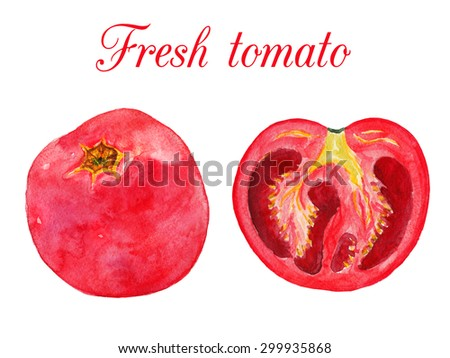 Tomato full view and cutaway view. Watercolor illustration on a white background