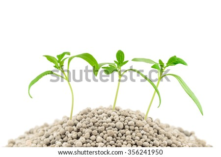 Tomato seedlings on the mineral fertilizers. Isolated on the white background - stock photo