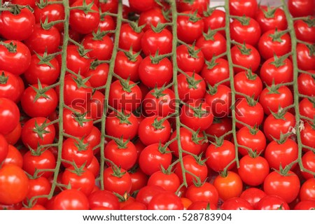 tomatoes cherry in the market