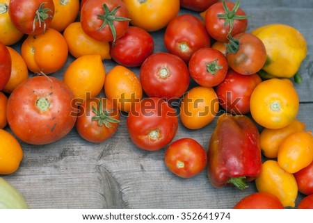 tomatoes from a bed.  tomatoes for cooking. crop of vegetables. - stock photo