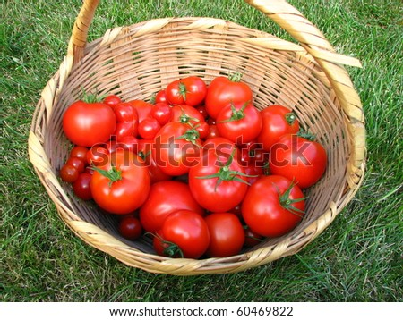 Tomatoes in a Basket on Grass