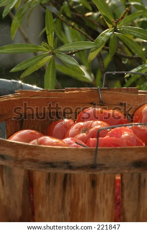 Tomatoes in a crate - stock photo