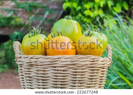 tomatoes in basket  - stock photo