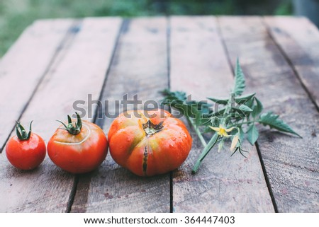 Tomatoes of different sizes on the old wooden table.