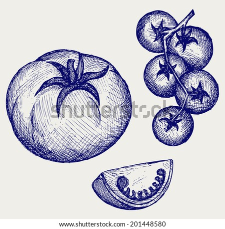 Tomatoes on the vine. Doodle style. Raster version - stock photo