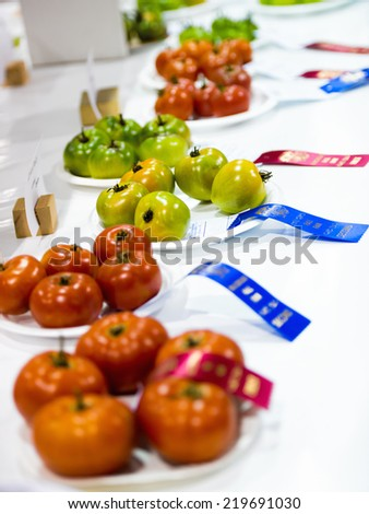 Tomatoes sit on a table with their ribbons on display during a competition at an agricultural fall fair.   - stock photo