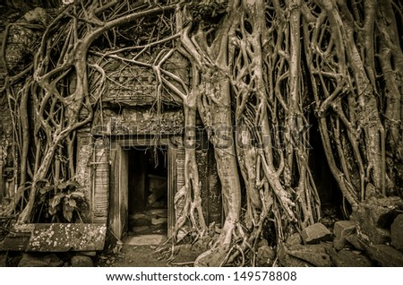 Tomb Raider tree in Cambodia, Siem Reap, Angkor Wat - stock photo