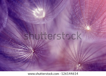 Toned abstract dandelion seeds - stock photo