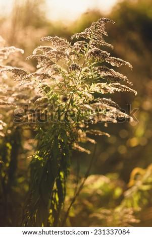Toned closeup photo of grass growing at autumn field - stock photo