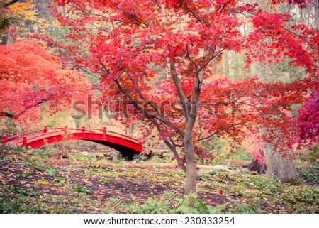 Toned image of red bridge and Japanese maple trees. - stock photo