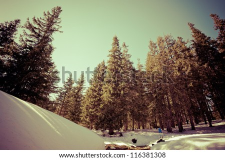 toned landscape in the mountains of freeride track. near trees can be considered a snowboard. - stock photo