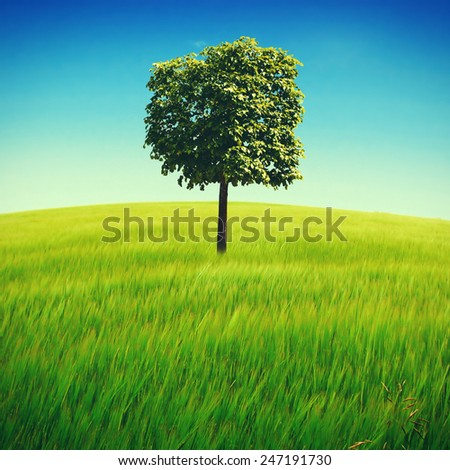 Toned Photo of Nature Summer Landscape with Tree in the Green Field - stock photo