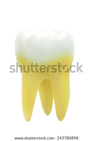 Tooth isolated on white background. - stock photo