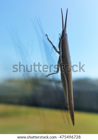 Toothpick grasshopper on glass with reflection against a blue and green background