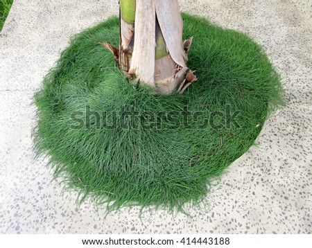 Top Aerial View Soft Landscaping Cypress Planting with Paving Vignette - stock photo