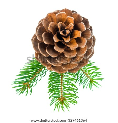 top down of Christmas decoration pine twig with cedar cone is isolated on white background, closeup   - stock photo