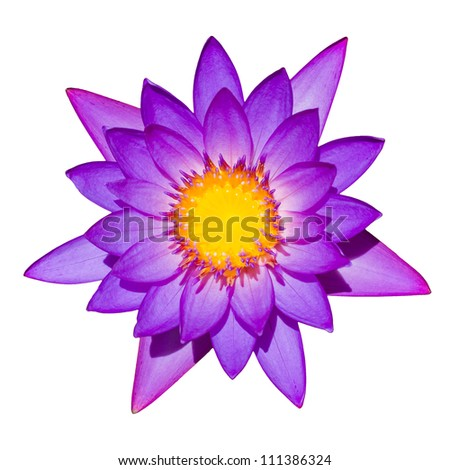 Top down shot of blooming purple lily isolated on a white background. - stock photo