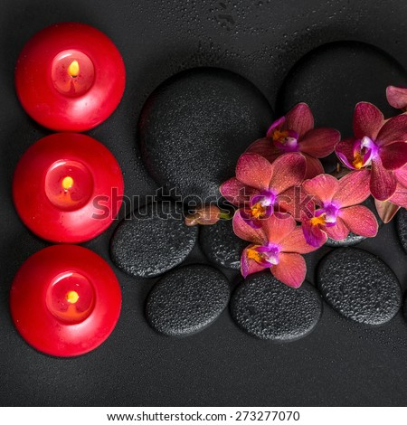 top down spa setting of blooming twig red orchid flower, phalaenopsis with water dew and candles on zen basalt stones, closeup - stock photo