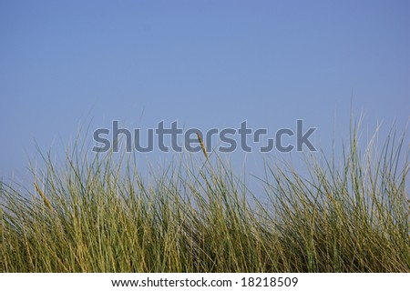 Top of a dune against the blue sky