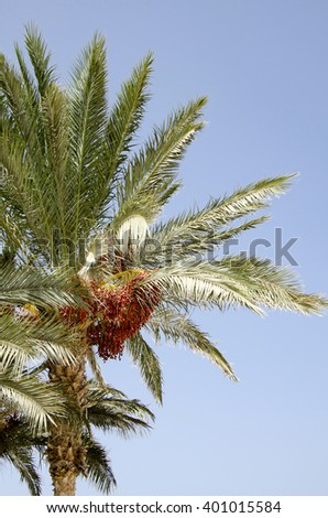 top of a palm tree against the sky - stock photo