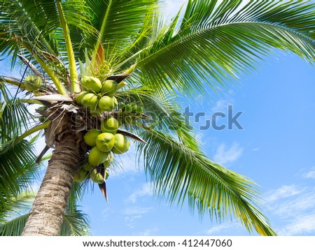 Top of coconut tree on blue sky. - stock photo