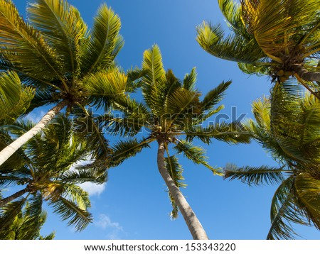 Top of the palm Stock Island, Florida. - stock photo