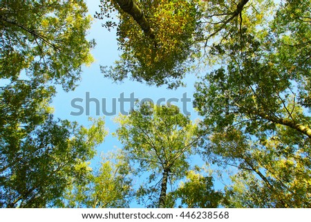 Top of trees over the blue sky - stock photo