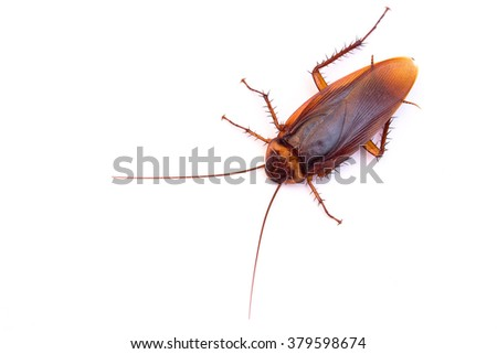 Top view a dead cockroach on white background - stock photo