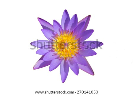 top view beautiful purple water lily in the garden isolated on white background - stock photo