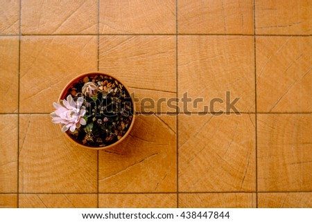 Top view, Cactus flower in pot on wooden table - stock photo