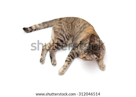 Top view cat isolated on white background. - stock photo
