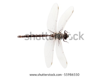 top view dragon fly - stock photo