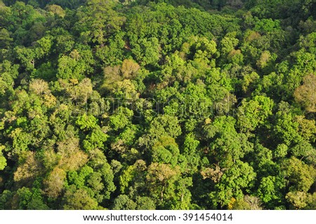 Top view forest background - stock photo
