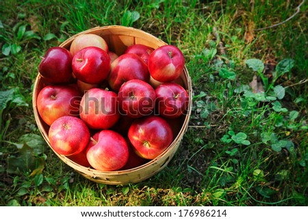 Top view of a basket full of red apples on grass during fall season - stock photo