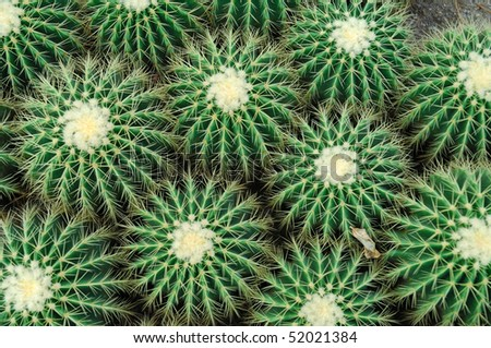 Top view of a cactus - stock photo