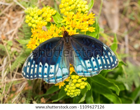 Top View Fabulous Blue Female Diana Stock Photo (Royalty Free) 1109627126 - Shutterstock