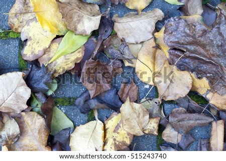 top view of autumn leaves on the ground on top of concrete pavers